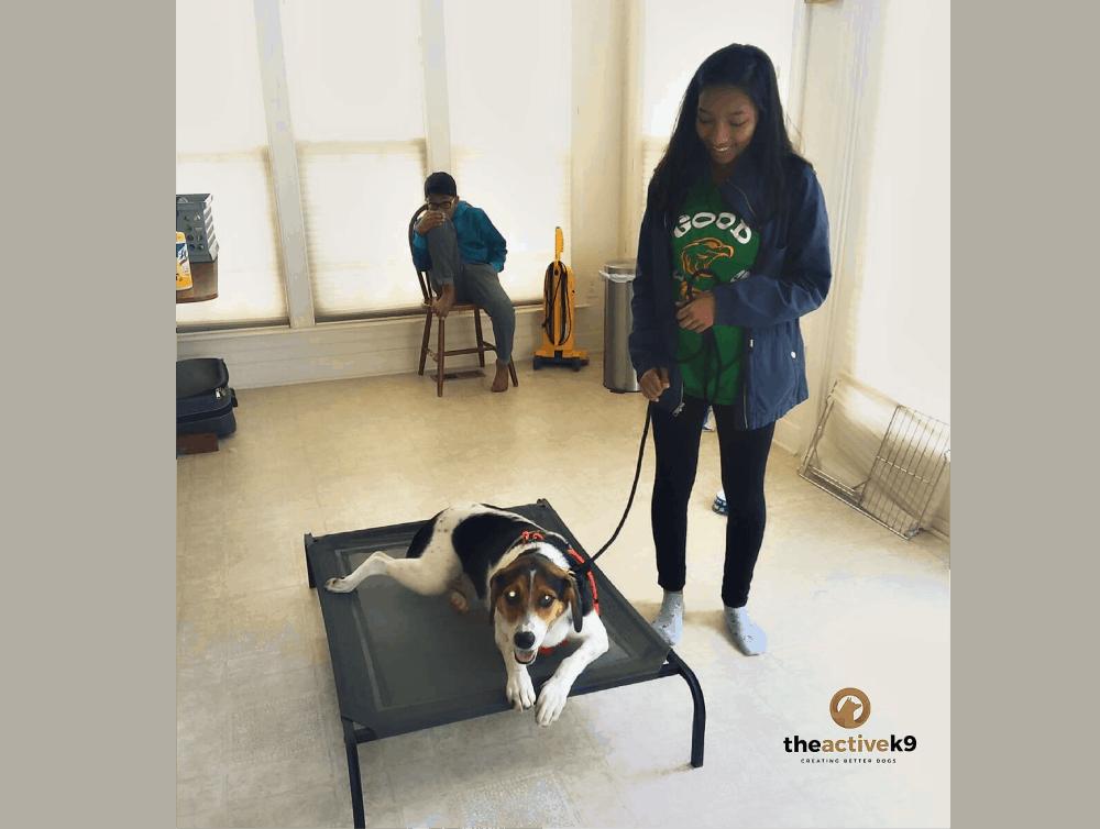 7 essential dog training commands