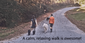 Dog Training Tips for Walking Calm Dogs