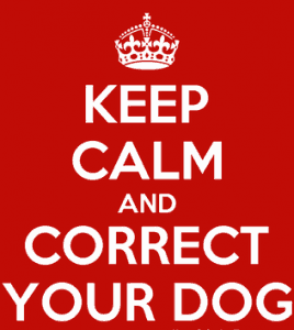 Correcting Your Dog and Staying Calm