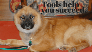 Dog Training Tools Can Help