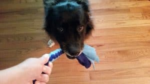 Structured Dog Games Like Tug