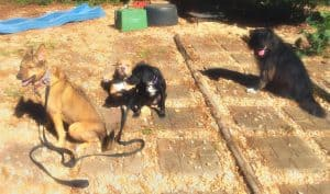 Will dog training help? Dog training helped these dogs