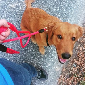 how to fix leash reactivity in a dog