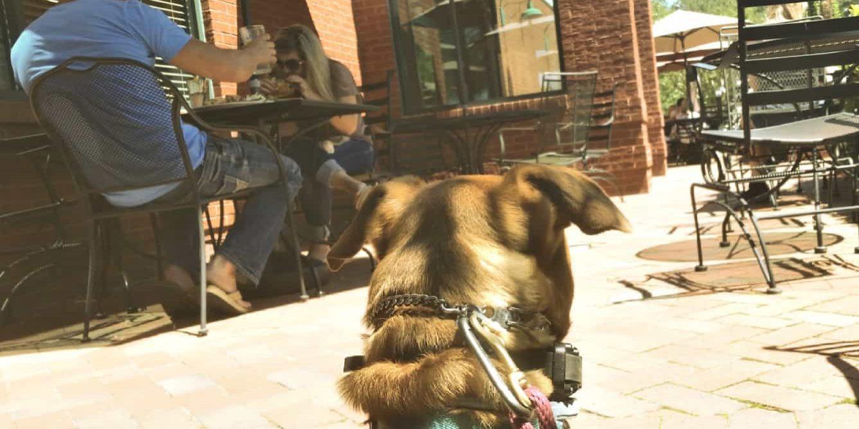Dog at restaurant